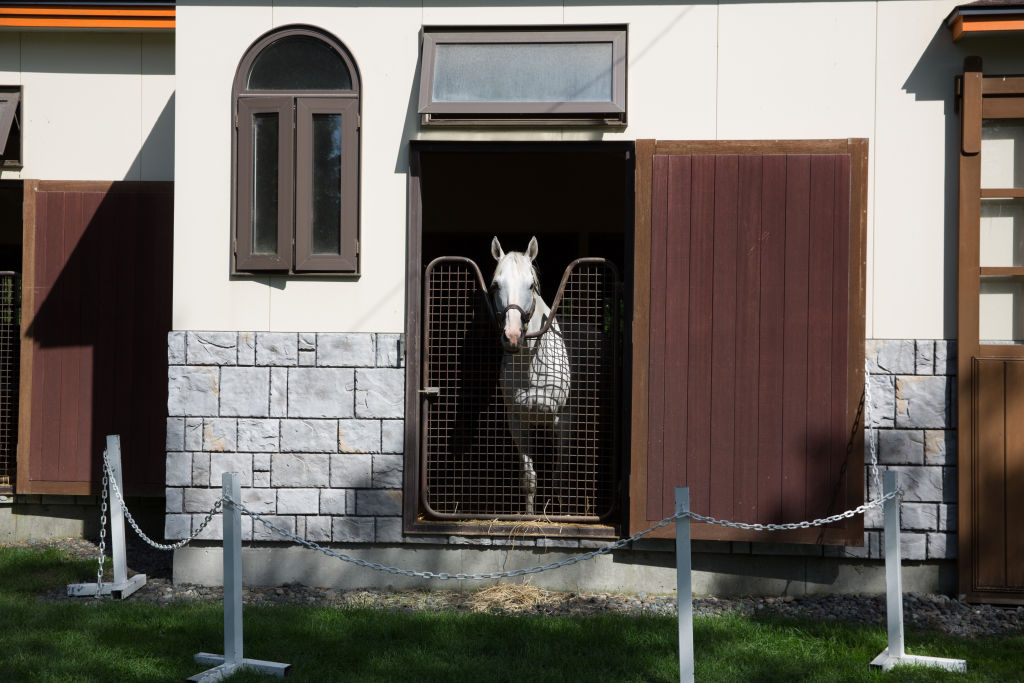 a white horse peeks out from its stall
