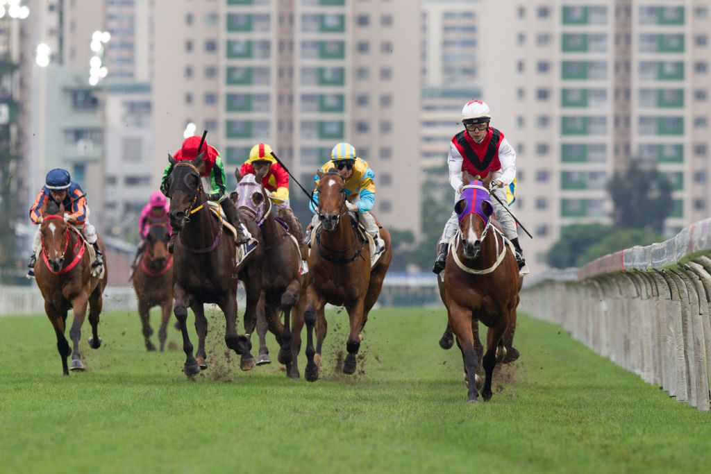 several horses racing against each other