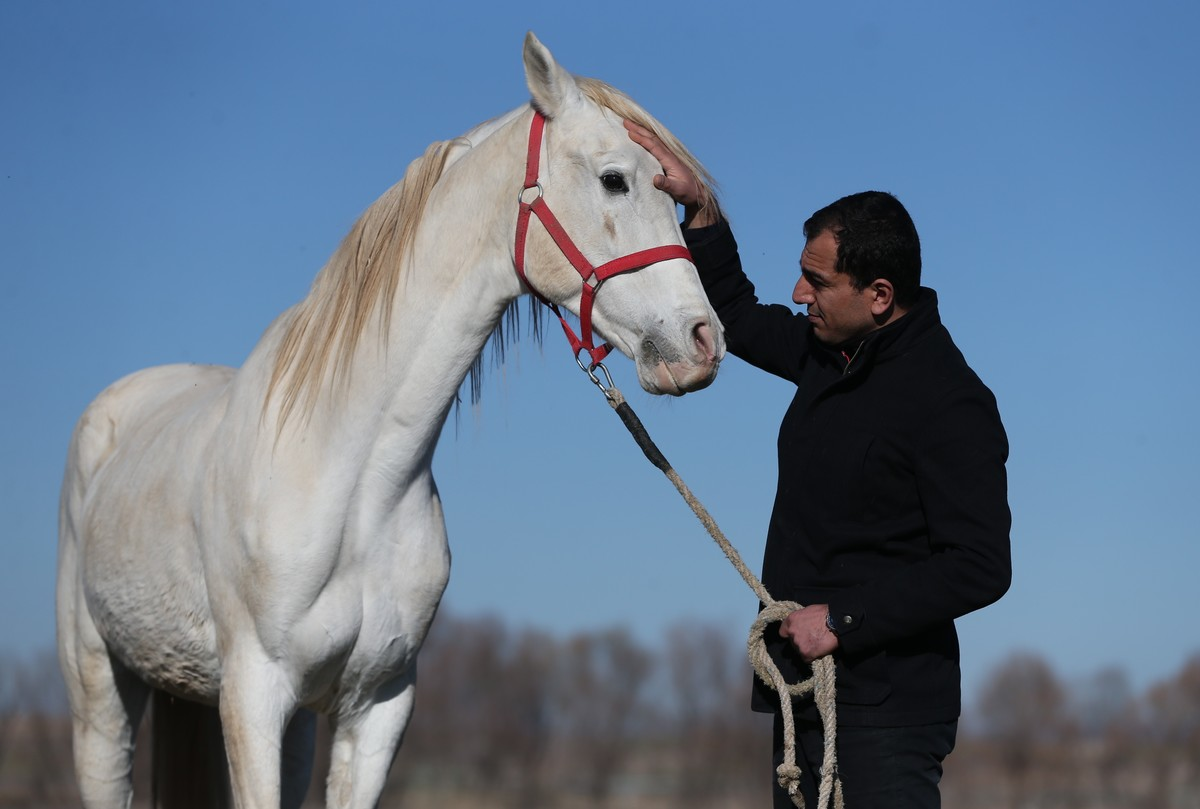 A horse syce pets an Arab horse at a horse farm