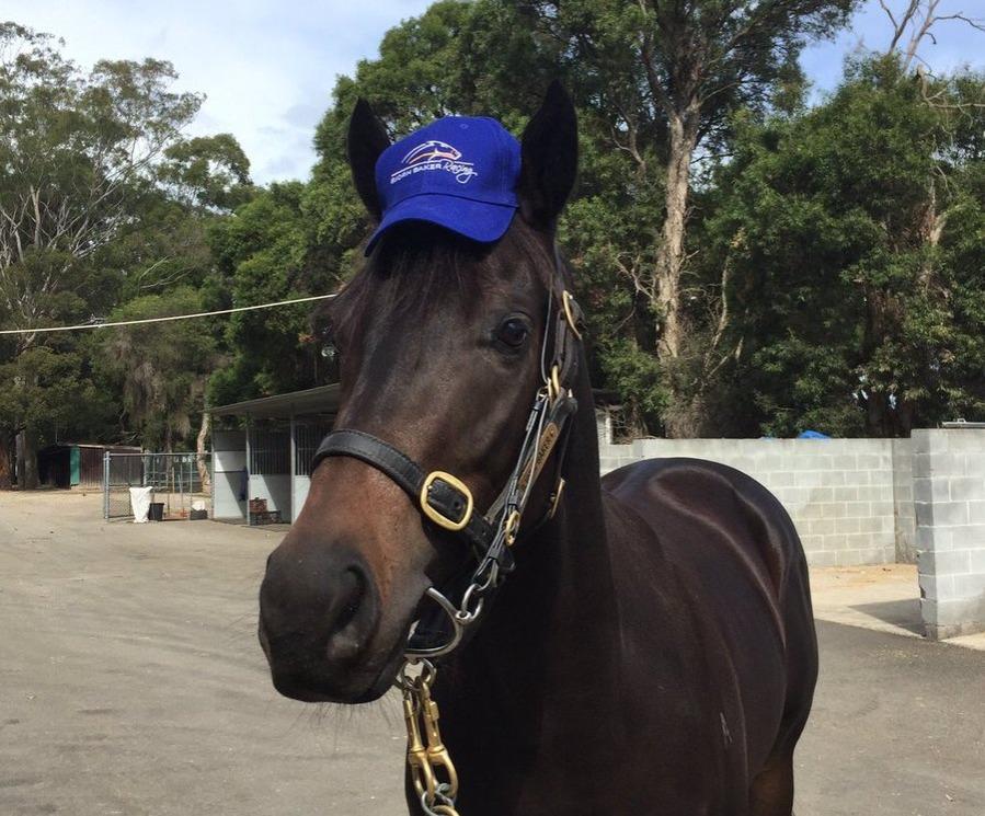 horsey mchorseface wins in australia