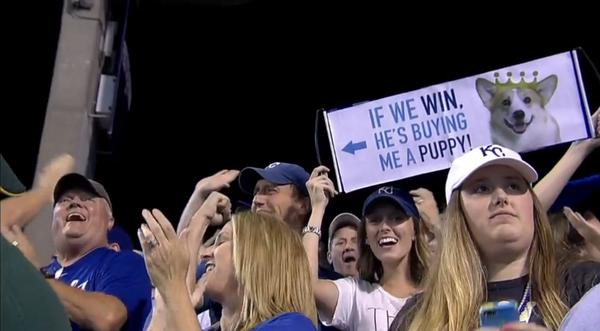 a puppy on the line for kansas city royals fan