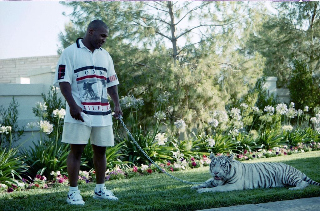 Mike Tyson poses with his white tiger during an interview at his home.