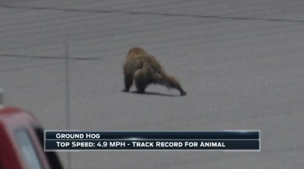 groundhog interrupting Nascar