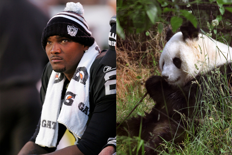 JaMarcus Russell Is The Saddest Of Pandas