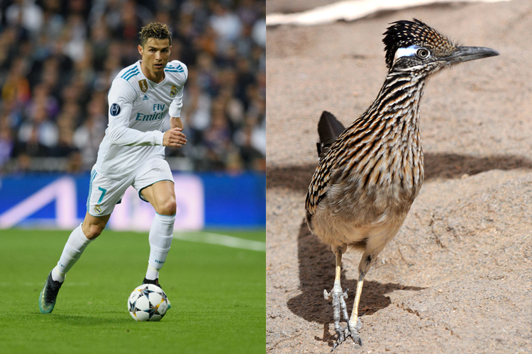 Cristiano Ronaldo Has The Legs And Hair Of A Roadrunner