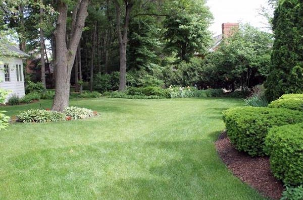 The backyard is covered in lush grass and surrounded by trees.